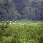 Plane Crashes into Jefferson Swamp, Occupants Escape Injury