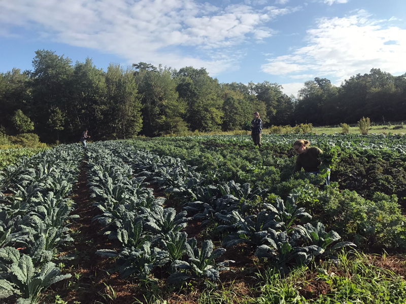 On Friday, July 6 at 7 p.m., six classical musicians will present a Farm to Fiddle concert celebrating local agriculture and classical music in Midcoast Maine. (Photo courtesy Reba Richardson)