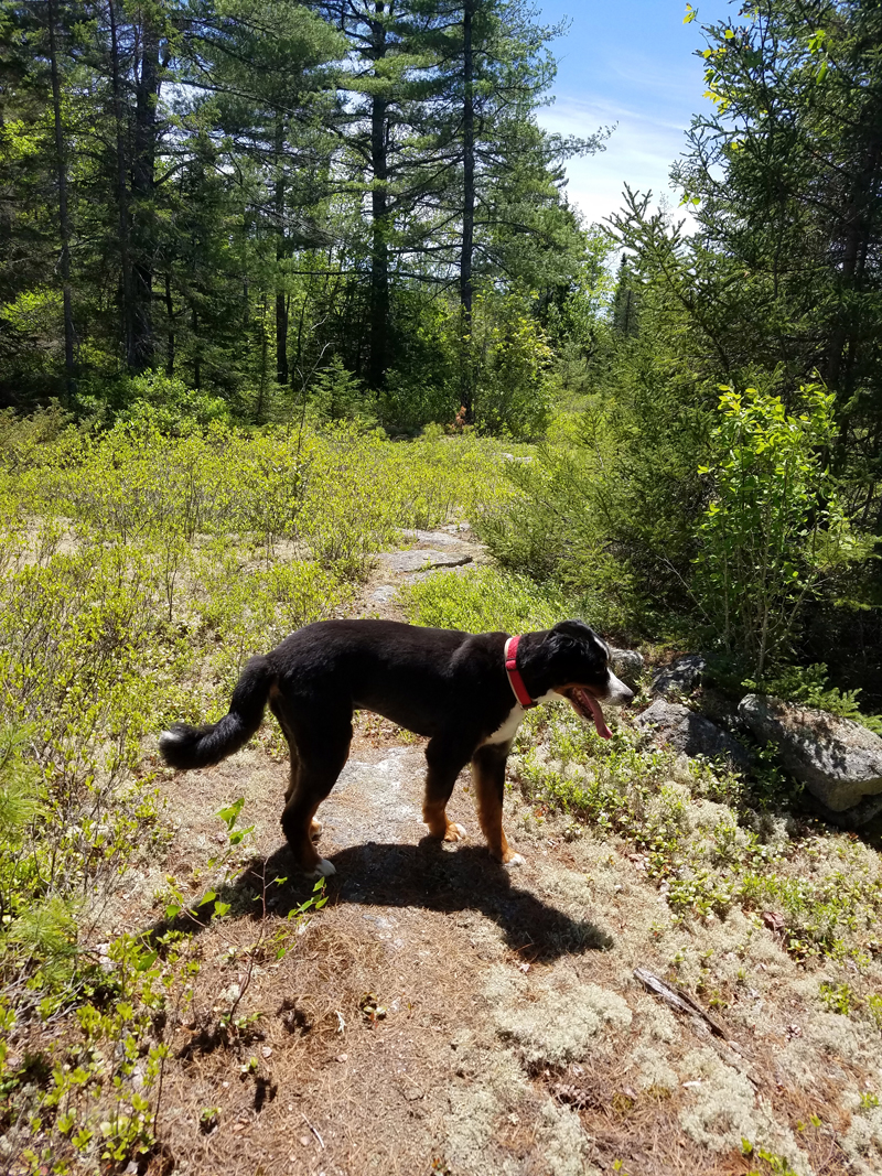 Toby on the trail. (Sarah Caton photo)