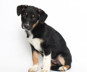 Shelters to Host Puppy Riot Adoption Event