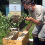Beekeepers to Host Ross Conrad
