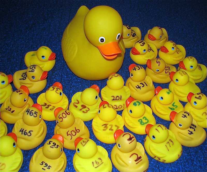Rubber duckies ready to race!