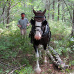 Woodland Stewardship Tour at Nature Center