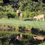 Midcoast Conservancy Wildlife Habitat tour in Searsmont