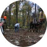Free Woodland Stewardship Tour on June 21