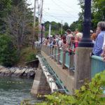 700 Rubber Duckies Race Under Damariscotta-Newcastle Bridge