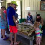 July Beach Exploration at Beachcombers' Rest