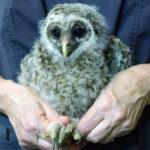 Bird Talk in Bremen