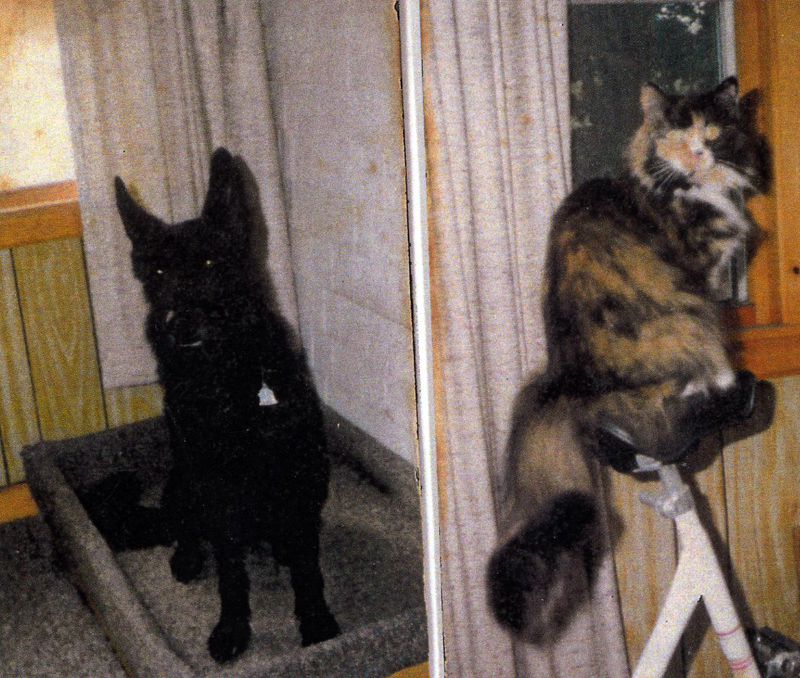 Bliss, the long-haired cat who loved cheese (right), and Oscar, the Belgian Shepherd who loved ice cream. (Photo courtesy Marjorie and Calvin Dodge)