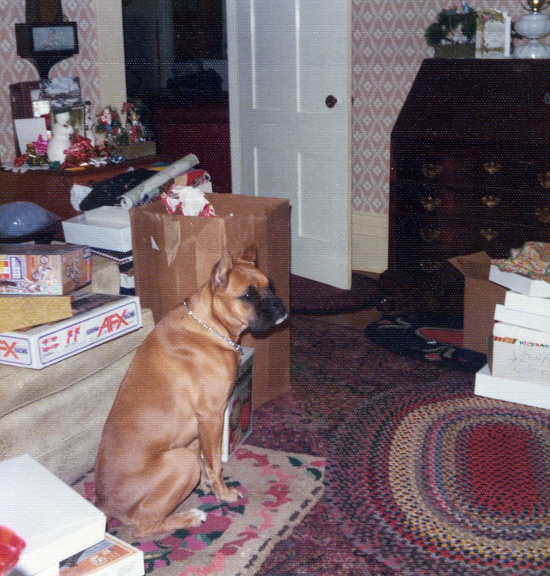 Kathleen and Marjorie's boxer dog, Lady, 1974. (Photo courtesy Marjorie and Calvin Dodge)