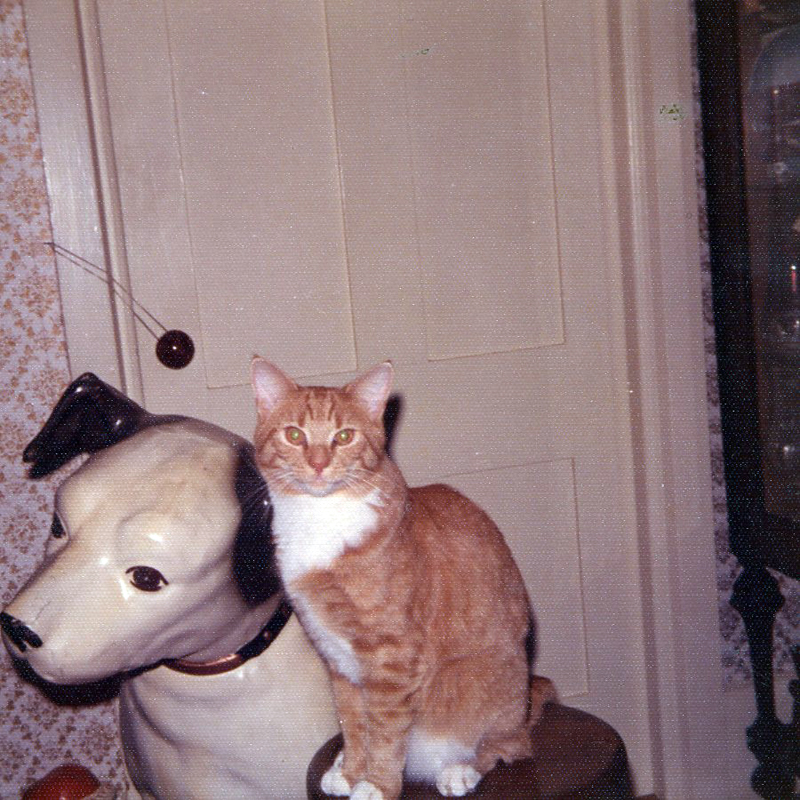 Our cat Sunny, 1972. (Photo courtesy Marjorie and Calvin Dodge)
