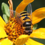 Pollinators in Agriculture Talk and Walk at Morning Dew Farm