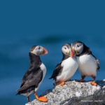 'Puffins, Little Fish, and Climate Change' at Lincoln Theater