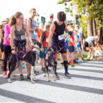 Save a Stray 5K to Benefit Animal Shelters