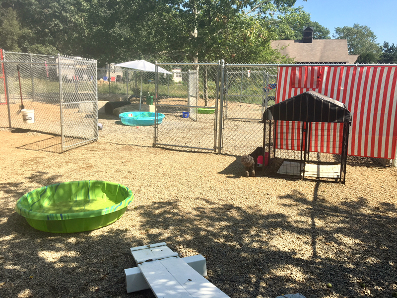 The backyard of the kennel is a Disneyland for dogs. (Suzi Thayer photo)