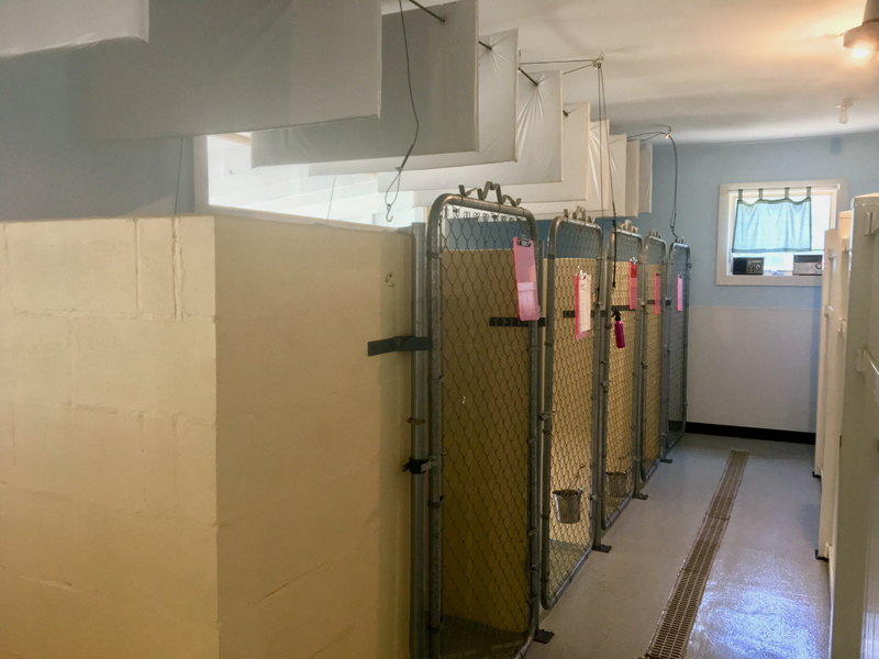 The facility is a clean, open space with kennels that have sliding doors to an outdoor kennel. (Suzi Thayer photo)