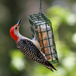 PWA Bird-Seed Sale Order Deadline is Oct. 4