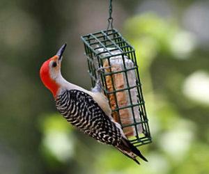 PWA Bird-Seed Sale Order Deadline is Oct. 4
