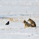 Farm Biodiversity Event on Co-Existing with Carnivores
