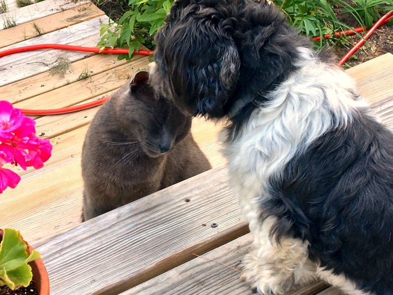 "Bunny, ""my"" stray, was happy to see her boyfriend, Elliot, after a long weekend away. (Suzi Thayer photo)"