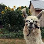 Misfit Love Day at Apifera Farm is Oct. 6