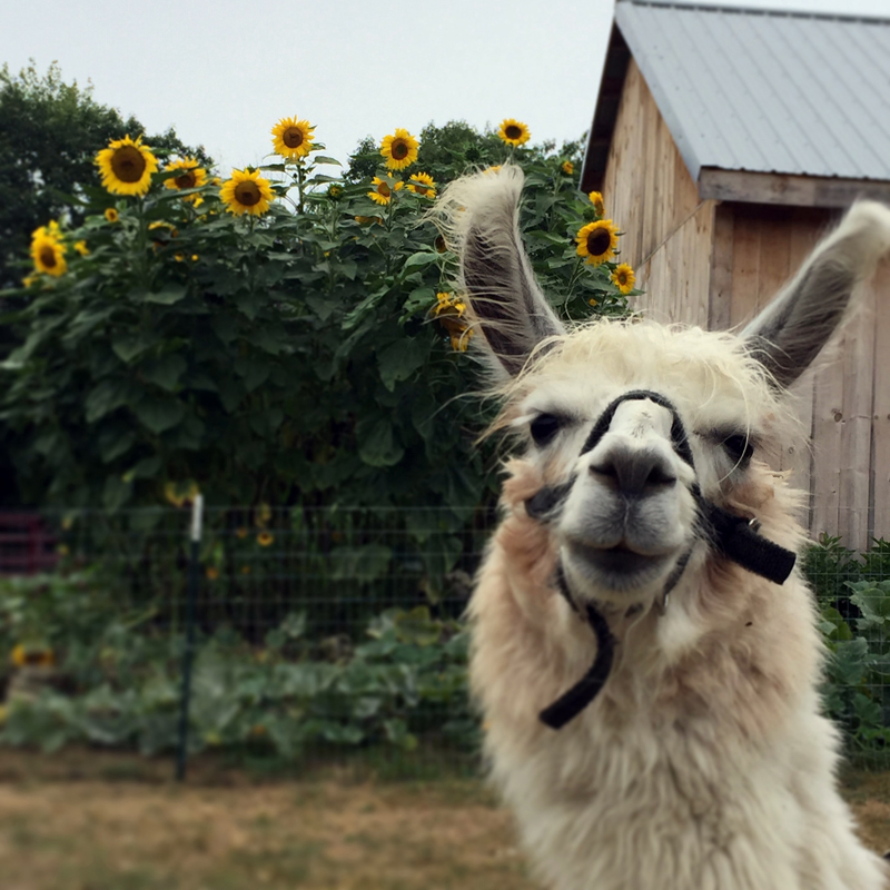 A resident of Apifera Farm.