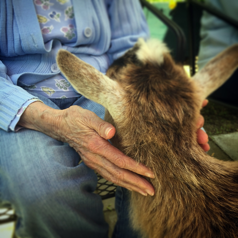 A companion animal from Apifera Farm.