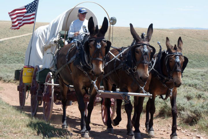 Nick Buck drives his team of mules along the Oregon Trail. (Photo courtesy Nick Buck)