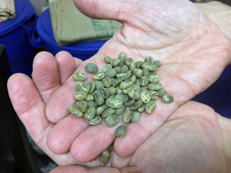 Coffee beans are green before roasting. (Suzi Thayer photo)