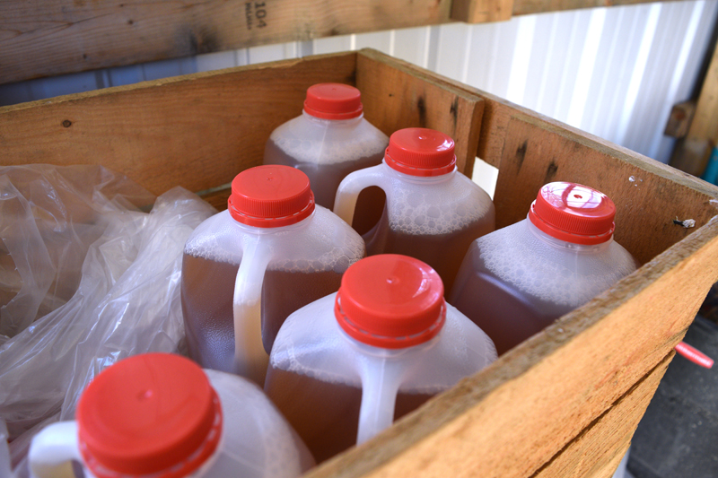 Half-gallons of cider in a crate at Miller's Custom Apple Pressing. The Millers will make cider for anyone who brings as little as 5 bushels of apples. (Jessica Clifford photo)