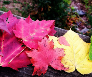 Bristol Woman Wins October #LCNme365 Photo Contest