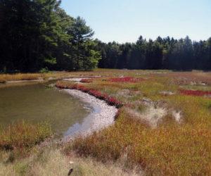 'Little Bit of Wilderness' Protected in Waldoboro