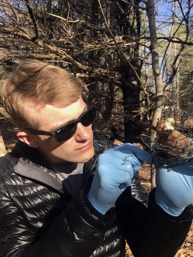 Wiscasset Middle High School student Matthew Chapman collects maggots from rotting chicken meat as part of a forensic science class in spring 2018. Students use entomology to learn how investigators determine time of death. (Photo courtesy Prema Long)