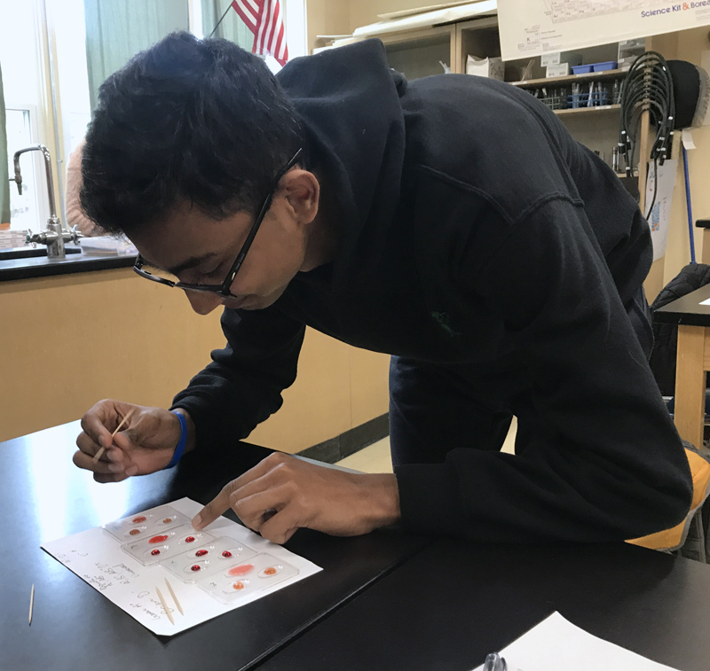 Wiscasset Middle High School student Muhammad Khalique conducts a blood test to determine blood type as part of a forensic science class in fall 2018. (Photo courtesy Prema Long)