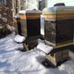 Beginning Bee School Starts Feb. 26