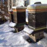 Beginning Bee School Starts Feb. 26