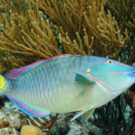 Fish Diversity Linked to Caribbean Coral-Reef Health