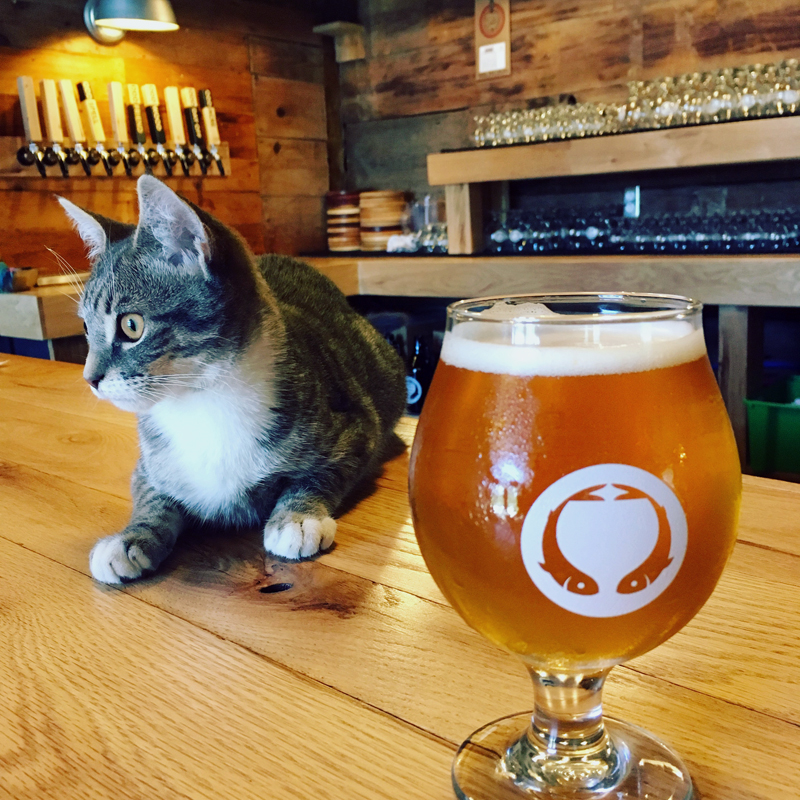 Rocket is the Odd Alewives Farm Brewery cat.