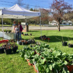 Garden Club of Wiscasset to Host Plant Sale