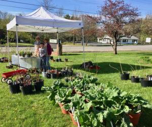 Garden Club of Wiscasset to Host Plant Sale
