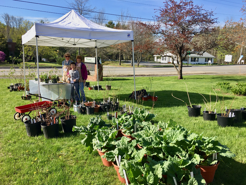 Ann Springhorn, Carole Dunbar, and a young helper get ready for the Garden Club of Wiscasset's annual plant sale.