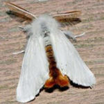 New Location for Browntail Moth Info Session
