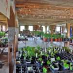 Morris Farm Plant Sale to Feature Heirloom Tomatoes