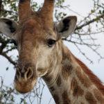 Family Fun Fair Offers South African Photo Safari at Silent Auction