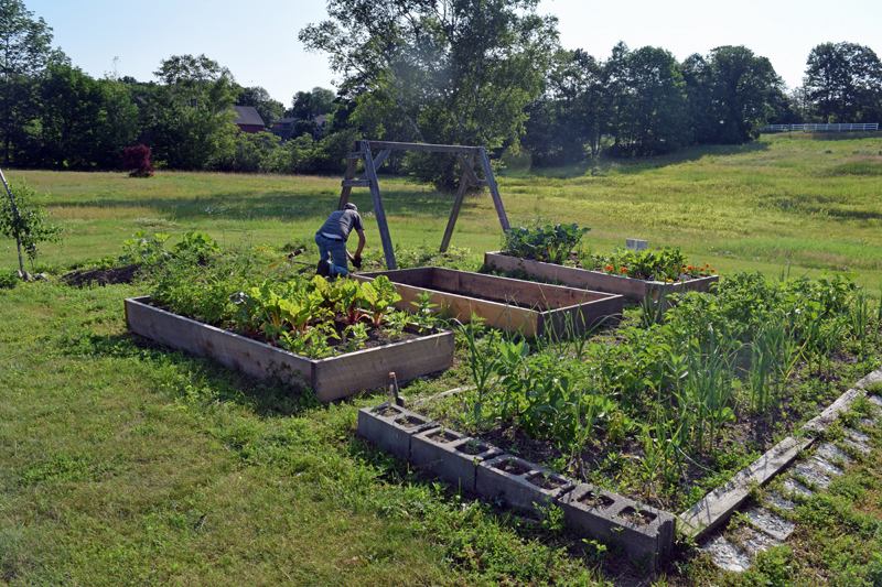 The Edgecomb Eddy School and Family Garden blooms with vegetables and flowers. The garden is in front of the school, on the lawn past the roundabout at the front entrance. (Jessica Clifford photo)