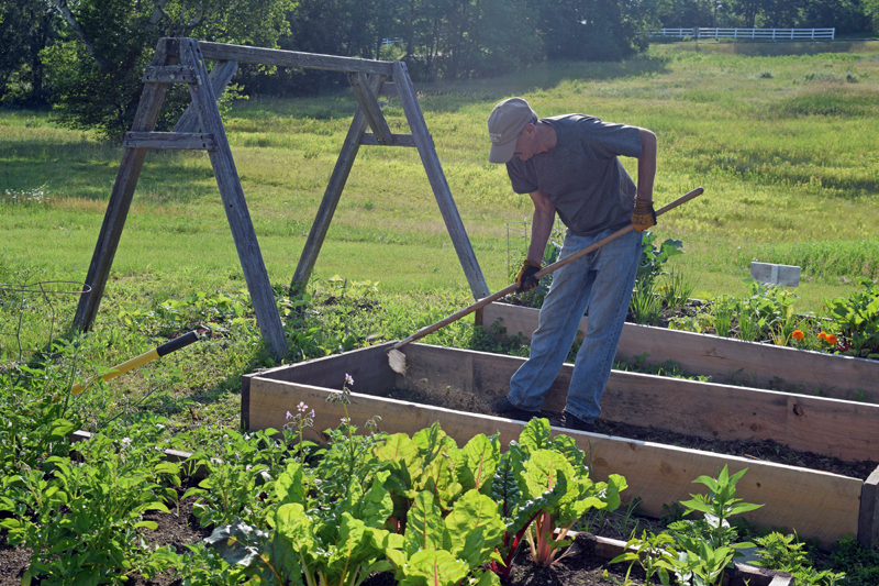 Bill Prince, a member of the Boothbay Harbor Rotary Club, works in a raised bed in the Edgecomb Eddy School and Family Garden on July 9. (Jessica Clifford photo)