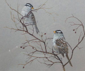 """White Crowned Sparrows,"" by Julie Babb."