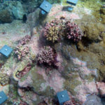 Coral Reefs Shifting Away From Equatorial Waters