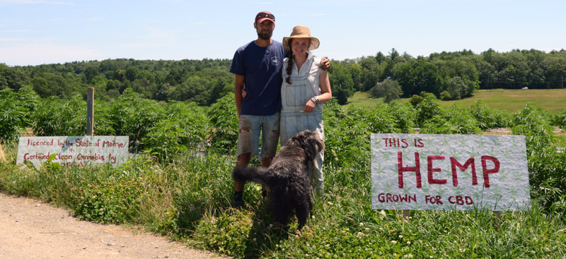 Ben Marcus and Taryn Hammer Marcus, with their dog, Olso, stand in front of their hemp fields at Sheepscot General Farm in Whitefield on July 18. The farm will offer a pick-your-own hemp option by appointment this fall. (Evan Houk photo)