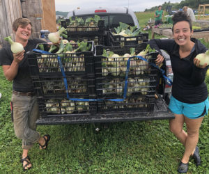Twin Villages Foodbank Farm Assistant Farm Manager Kaitlyn Gardner and volunteer Jess O'Rourke with one day's harvest of very large onions.